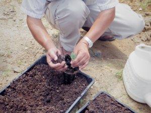 まず土と苗を入れ