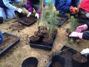 苗木の植え替作業